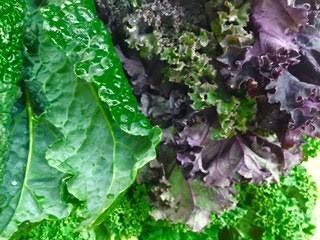 Nutritious and healthy Kale - Plant based whole food