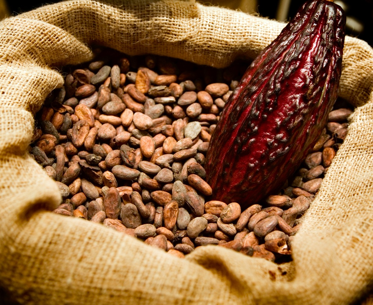Healthy raw cacao