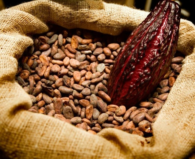 Healthy raw cacao - Healthy blog